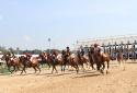 Cận cảnh trường đua ngựa 2 nghìn tỳ của đại gia Bình Dương