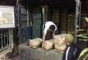 Buôn trái cây TQ từ 4h sáng vẫn không qua mặt được CSGT Quảng Ninh