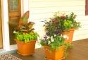 Mang tài lộc, may mắn vào nhà nhờ những loài hoa quen thuộc sau