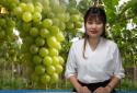 Bản tin Cảnh báo chất lượng: Nhập nhằng nho Ninh Thuận và nho Trung Quốc