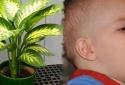 Loại cây này sẽ khiến con bạn ngộ độc trong nháy mắt nếu không cẩn trọng