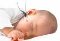 Chỉ phun thuốc diệt muỗi: Sai lầm trong phòng chống sốt xuất huyết