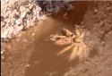 Kinh hoàng quy trình sản xuất mắm tôm bẩn