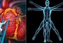 Những sự thật 'không thể tin nổi' về cơ thể người