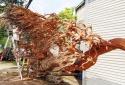 Đại gia chi 200 triệu mua bộ gốc rễ dáng 7 con rồng 200 tuổi
