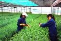 Bộ KH&CN hỗ trợ Quảng Nam xây dựng chuỗi sản phẩm nông nghiệp an toàn