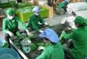 Pakistan 'siết' tiêu chuẩn, xuất khẩu chè Việt Nam tiếp tục giảm mạnh