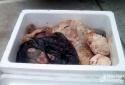 Nghệ An: Bắt giữ 30 kg nội tạng bốc mùi hôi thối trên xe khách