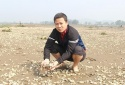 Tìm ra nguyên nhân khiến hàng trăm tấn ngao chết ở Thanh Hóa