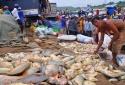 Hơn 1.500 tấn cá chết trên sông La Ngà: Hé lộ nguyên nhân ban đầu