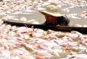 Cá chết trên sông La Ngà: Vì sao nguồn nước nhiễm độc vượt ngưỡng nhiều lần?