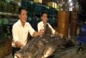 Cá lăng có gì đặc biệt mà đại gia Việt chi trăm triệu mua ngay về 'làm thịt'?
