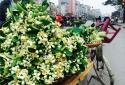 Vài trăm nghìn một cành hoa bưởi vẫn hút khách Hà thành
