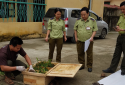 Phát hiện 29 con rùa Sa Nhân thuộc loài nguy cấp được 'tuồn' về Hà Nội tiêu thụ
