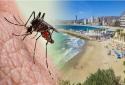 Bị muỗi đốt - khách du lịch nhiễm vi rút nguy hiểm
