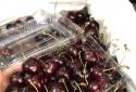 Cherry Mỹ rẻ bất ngờ, chỉ 249 nghìn đồng/kg tại Việt Nam: Tiết lộ lý do