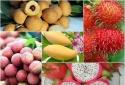Trái cây Việt- Một năm vượt khó