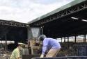 Phát hiện 420 kg mắm tôm không rõ nguồn gốc, xuất xứ