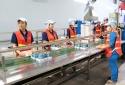 Bến Tre: Tăng cường ứng dụng công nghệ nâng cao năng suất chất lượng sản phẩm dừa