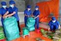 Hơn 5 tấn miến dong Bắc Kạn lần đầu xuất khẩu sang châu Âu