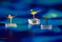 Kỳ lạ loại robot tí hon có khả năng thu gom chất gây ô nhiễm trong nước