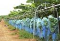 Cơ khí nông nghiệp của THACO phục vụ trong nước và xuất khẩu