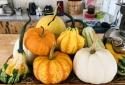 Ngắm vườn bí Halloween tiền tỷ của người Đà Lạt