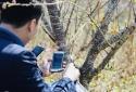 Bộ KH&CN hướng dẫn thực hiện truy xuất nguồn gốc cho cây đào, cây mai
