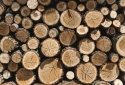 Dễ dàng truy xuất nguồn gốc gỗ với tiêu chuẩn ISO 38200