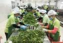 Nông sản Việt ngày càng vươn xa trên thị trường thế giới