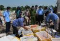 Nam Định: Tiêu hủy nửa tấn thực phẩm tươi sống không rõ nguồn gốc