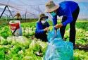 Giải pháp gỡ khó cho người nông dân, tiếp tục nâng cao vị thế ngành nông nghiệp
