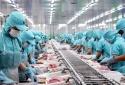 Xuất khẩu thuỷ sản sang thị trường ngách, hạn chế tác động của đại dịch