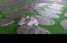 Bắt quả tang cơ sở tại Phan Thiết dùng hóa chất làm trắng cá, mềm xương