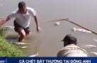 Cá chết bất thường tại huyện Đông Anh, Hà Nội
