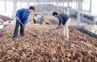 Vì sao chất lượng sản phẩm tinh bột sắn của Việt Nam mãi ở mức trung bình?