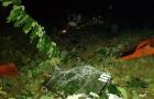 Ô tô lao xuống vực ở Sapa làm hàng chục người chết và bị thương