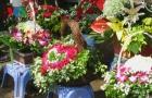 Hoa tươi ở Hà Nội hút khách ngày 20/10 dù giá cao