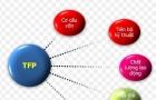 Hướng dẫn áp dụng hệ thống chỉ tiêu và phương pháp đo lường TFP