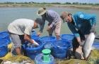 Metro hỗ trợ nông dân chuyển đổi VietGAP trong nuôi trồng thủy sản