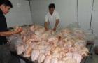 Nhận biết thực phẩm an toàn: Cách nhận biết gà Trung Quốc