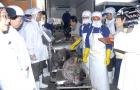 Đưa cá ngừ Việt Nam sang thị trường khó tính nhất thế giới