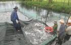 Phương pháp phòng bệnh tổng hợp nâng cao năng suất thủy sản mùa nắng