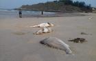 Vụ cá chết hàng loạt: Tổng kiểm tra Formosa Hà Tĩnh