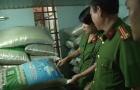 Huế: Phát hiện cơ sở sản xuất giá đỗ ngâm bằng hóa chất