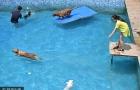 Cận cảnh hồ bơi rộng 2.000 m2 dành riêng cho chó của thiếu gia 8X 'chơi ngông'
