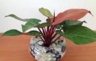 Chuyên gia mách nước trồng cây phong thủy để giữ tiền trong nhà
