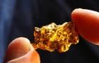 Phát hiện kinh ngạc vi khuẩn có thể 'thải' ra vàng nguyên chất