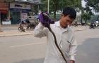 Hà Nội: Xôn xao rắn sống dài hơn 1,2m rơi từ trên cao xuống sảnh chung cư Linh Đàm