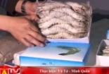Bắt sống 2 cơ sở bơm bột thạch cao vào thân tôm sú